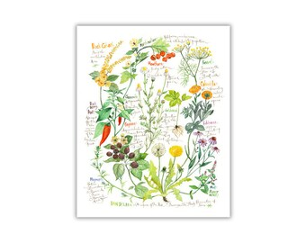 Botanical chart, Medicinal plant illustration, Heal herb print, Kitchen decor, Healing herb poster, Medicinal properties of herbs wall art