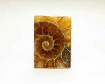 Stunning Small Rectangle Ammonite Fossil Designer Cabochon