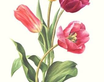1972 Vintage tulip poster Tulip wall art Botanical poster French country decor  Botanical art Vintage botanical print Flower print
