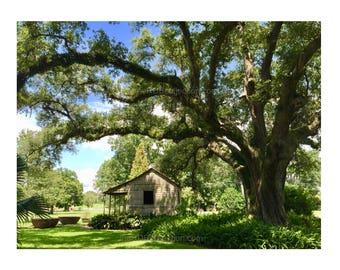 Sugar Cane Pots Photograph - Louisiana Plantation