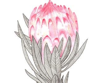"Single Protea Watercolour Art Print 8""x10"""