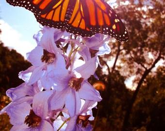 Monarch Butterfly Delphinium, Garden, Flower Photograph