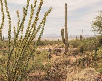 Arizona photography, tuscon arizona, saguaro cactus, desert photography, desert art, southwest, boho decor, bohemian, oversized wall art,
