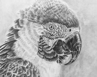 "20% off Macaw, Original Graphite Drawing 10""x11.5. Wall Art, Home Decor, Macaw Art, Original Fine Art, Parrot drawing, Bird wildlife art"