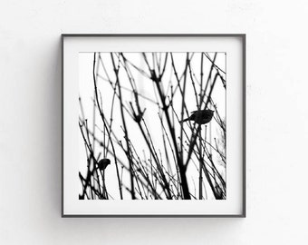 Bird prints dorm room decor wife gift rintable picture ursery decor tree print living room decor nature prints, apartment deor, 10x10
