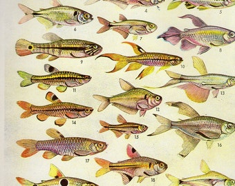 Antique Print, FISH Chart 1950 beautiful wall art vintage color lithograph illustration sea ocean creatures bookplate