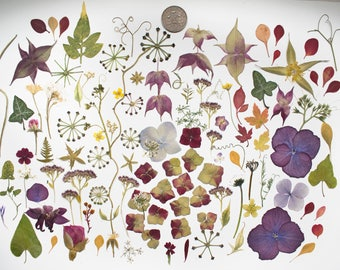 Pressed Flowers Foliage for Card making Scrapbooking art supplies, craft supplies Hydrangea Ivy Umbels