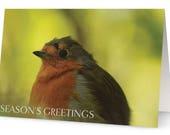 Robin Season's Greeti...
