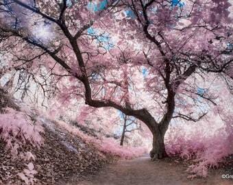 Pink Oak Forest 2, Infrared Fine Art Photography, Metallic Paper  / Metal Print