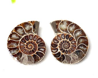 2pcs Gorgeous two Ammonite slice,Fossil ammonites ,Jewelry making Supplies#239A