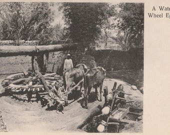 FREE POST - Old Postcard - EGYPT Water Wheel - Vintage Postcard - Unused