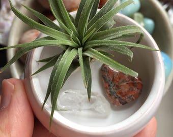 Wisdom + Healing Crystals | Air Plant Ceramic Altar | Spiritual Junkies | Reiki Love Infused | Quartz  Leopard Skin Jasper | Succulent