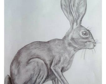 Hare - Signed Limited Edition A4 Print of an original pencil drawing.