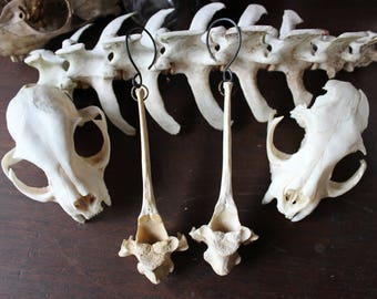 Vertebrae Ear Weights