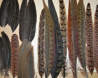 FG20 - Set of natural tabulations pheasant feathers 20plumes-9/27cms - (FG20)