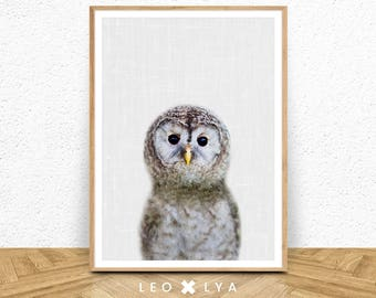 Nursery animal print, printable art, baby owl, nursery decor, animal art, baby animals, nursery wall art, owl wall art, kids art, baby