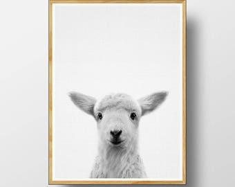 Lamb Print,  Baby Sheep Print,  Nursery Animal Print, Nursery Animals, Nursery Printable, Nursery Art Print, Farm Animal, Baby Animal Prints