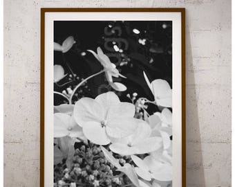 Hydrangea Print, Hydrangea Plant, Hydrangea Decor, Hydrangea Photography, Hydrangea Art, Hydrangea Gift, Lace Cap Hydrangeas, Flower Print