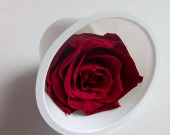 Eternal, natural rose stabilized