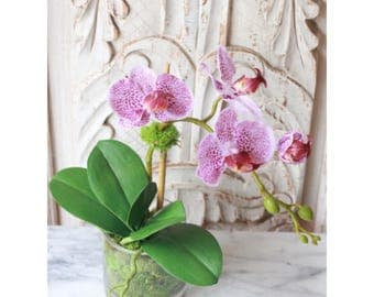 small purple orchid in glass vase with moss , phalenopsis orchid, fake orchid