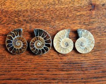 Ammonite Fossil / Ammonite Pair / Sliced Ammonite / Polished Fossil / Crystal Healing / Shell Fossil / Beautiful / Crystals / Spiritual