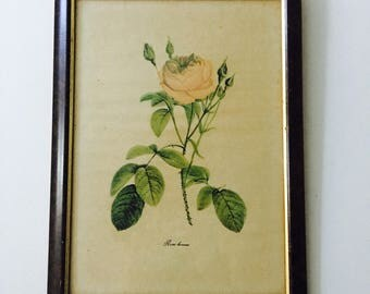 Vintage Pink Rose Print Italian