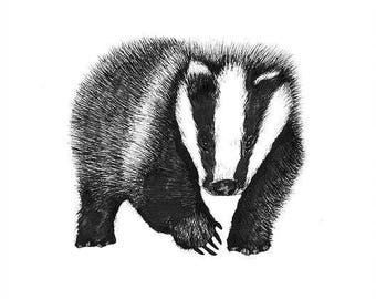 Badger print - mounted
