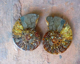 Ammonite Pair Fossil, Ammonite Pair, Ammonite Fossil, Home Decor Specimen, Collectors Fossils, Ammonite Polished Pair, Display Fossil