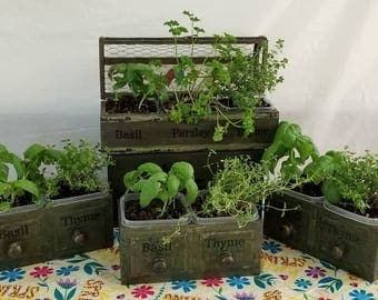 "Double Wooden Planters ""HERBS, HERB!"" part of the ""HERBORISTE"" series for 2018"