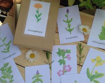 "Set of ""Soul plants"""