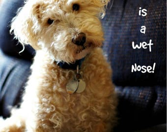 Day Planner A WET NOSE