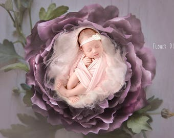 3 color version  Newborn Digital Backdrops, newborn digital backdrop, digital prop flower nest, baby nest,photographie bébé,Neugeborene