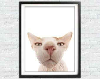 Sphynx Cat Print, Sphynx Cat Art Print, Cat Poster, Cat Wall Art, Hairless Cat Wall Decor, Cat Painting, Cat Lover, Printable Art, Cat Love