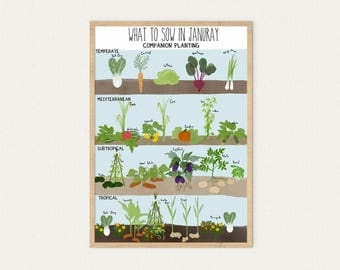 Planting Guide January, A3 & A4, Poster, Grow Your Own Food, Permaculture, Companion, Planting, Gardening