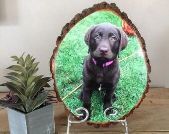 Pet Memorial, Pet Portrait, Pet Loss Gifts, Pet Memorial Stones, Pet Gift, Dog Gift, Cat Lover Gift, Pet Memorial Frame, Pet Memorial Gifts