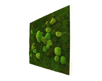 MOSS plant painting