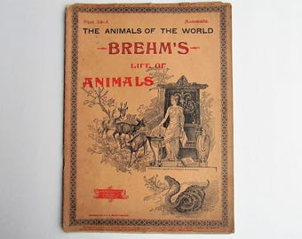 Antique 1896 Brehm's Life of Animals, Part 34-A, Illustrated, 1890's Booklet, Marquis & Company, The Cloven-Hoofed Animals, The Deer, Swine