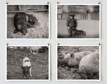Pig Wall Art, Pig Photos, Black and White Photography, Farmhouse Modern, Country Wall Decor, Pig Decor, Farmhouse Wall Decor