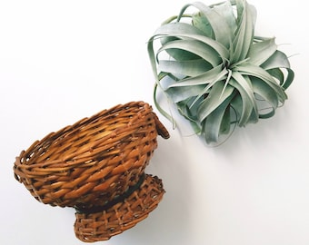 Vintage Wicker Large Mouth Dish( Airplant not included)