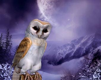 Barn Owl - Winter Scene