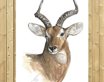 Antelope, illustration in watercolor, sheet A5, A4 or A3, antelope art, wall decor