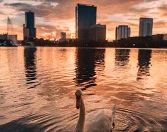 Florida Photography Canvas / Lake Eola, Orlando during Sunset / Florida Photography / Florida Landscape / Florida Canvas / Canvas Wall Art