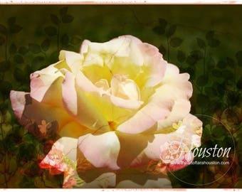 Botanical Art Card 3