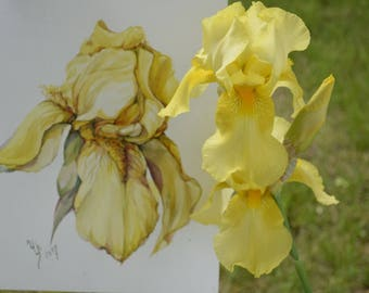 Floral Fine Art Watercolor Painting Flower Art Yellow iris- Original Watercolour Home Decor