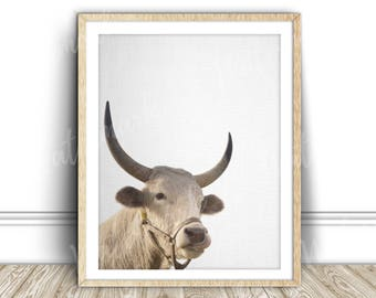 Bull art print Highland cow Animal wall art nursery poster canvas Digital printable Instant Download