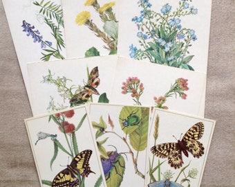 Postcards mini set botanical & insects