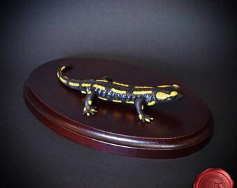 Salamandra salamandra terrestris, western fire salamander