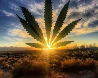 Cannabis Cultivation 101 Workshop