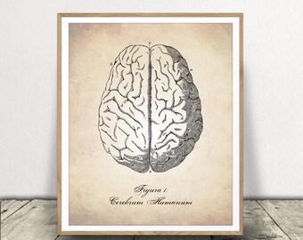 PRINTABLE Human Brain, Human Anatomy Digital Download, Human Brain Print, Human Anatomy, Brain Printable, Brain Print, Anatomy Download, Art
