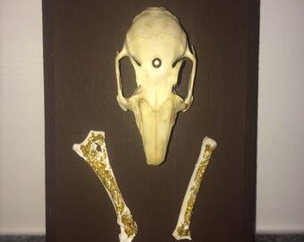 Taxidermy mount rabbit skull bones handmade vintage